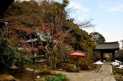 鎌倉海蔵寺の梅花チェック2014