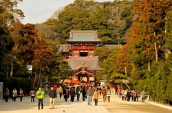 鎌倉鶴岡八幡宮の梅花チェック2014