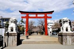 鎌倉の桜花お花見スポット2014段葛