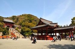 鎌倉桜花チェック2014鶴岡八幡宮