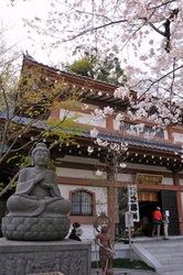鎌倉桜花チェック2014長谷の長谷寺の桜