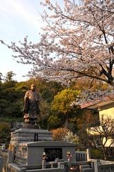 鎌倉桜花チェック2014鎌倉妙本寺の桜