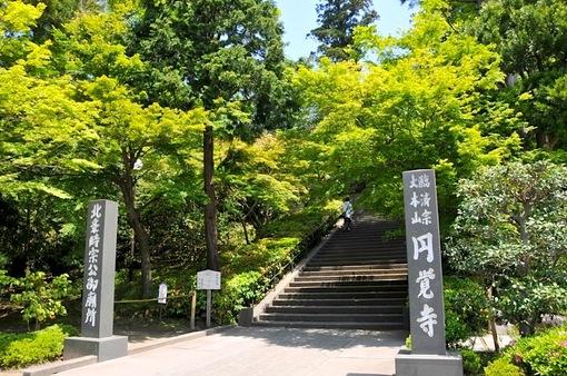鎌倉新緑散策@円覚寺の入口のモミジ