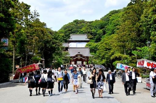 鎌倉鶴岡八幡宮境内の新緑スポット