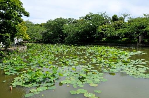 鎌倉鶴岡八幡宮境内の新緑スポットの源平池