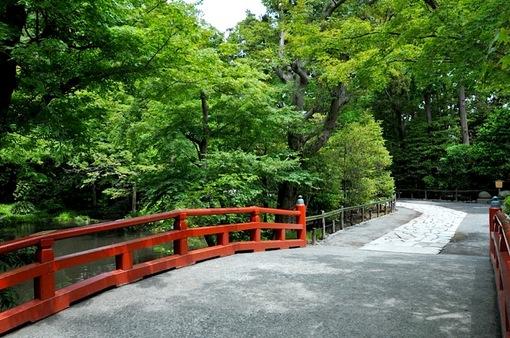 鎌倉鶴岡八幡宮境内の新緑スポット柳原神池