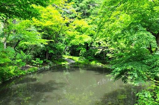 鎌倉鶴岡八幡宮境内の新緑スポットの柳原神池