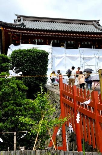 鎌倉鶴岡八幡宮境内の新緑スポット大銀杏の若木