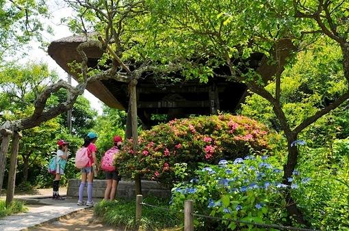 北鎌倉の東慶寺の紫陽花とツツジ