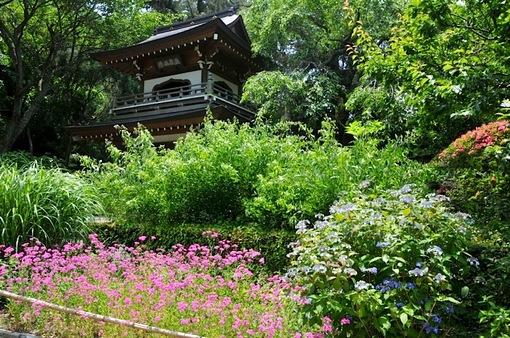 北鎌倉の浄智寺の紫陽花