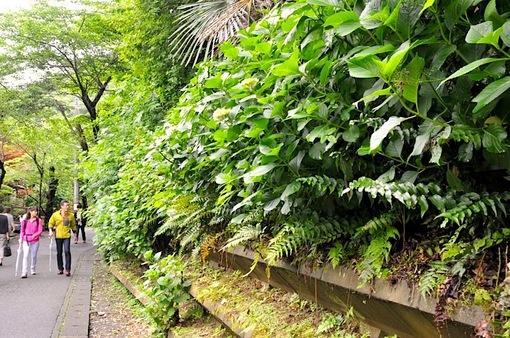 鎌倉紫陽花(あじさい)チェック2014北鎌倉明月院