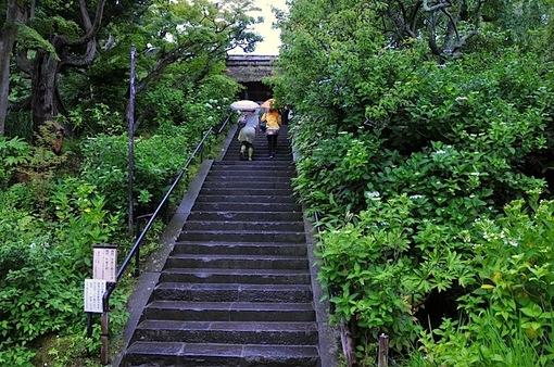 鎌倉紫陽花(あじさい)チェック2014北鎌倉東慶寺