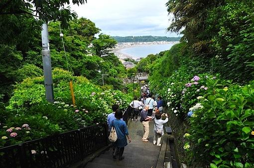 鎌倉紫陽花(あじさい)チェック2014極楽寺&長谷の成就院からの海