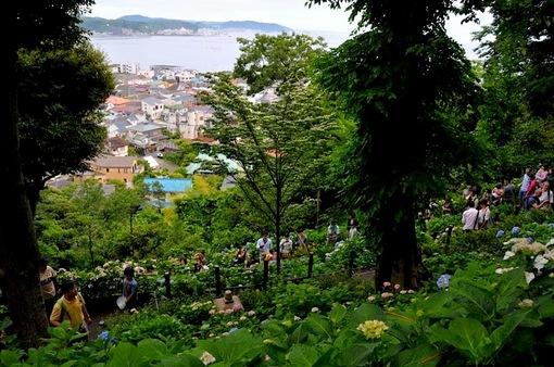 鎌倉紫陽花(あじさい)チェック2014長谷寺の眺望散策路からの海