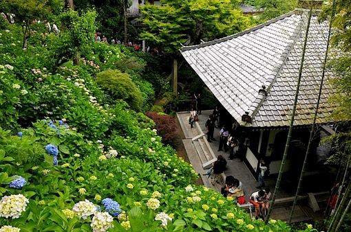 鎌倉紫陽花(あじさい)チェック2014長谷寺の眺望散策路