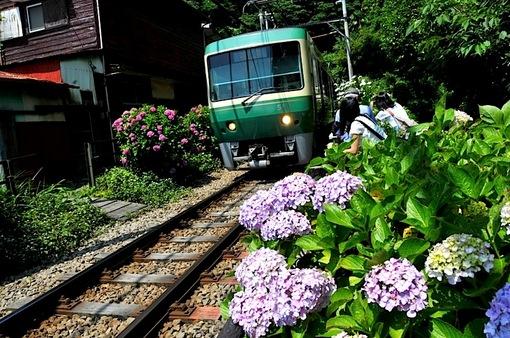 鎌倉紫陽花(あじさい)チェック2014御霊神社の江ノ電とアジサイ