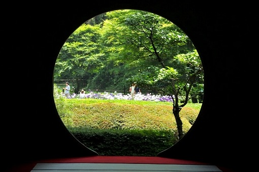 鎌倉紫陽花(あじさい)チェック2014北鎌倉のあじさい寺明月院の裏庭園の花菖蒲