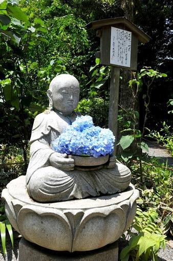 鎌倉紫陽花(あじさい)チェック2014北鎌倉のあじさい寺明月院の花想い地蔵