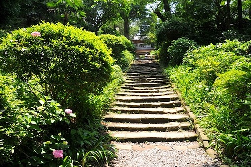 鎌倉紫陽花(あじさい)チェック2014北鎌倉の浄智寺