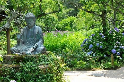 鎌倉紫陽花(あじさい)チェック2014北鎌倉の東慶寺の花菖蒲と紫陽花