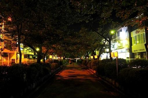 鎌倉鶴岡八幡宮のぼんぼり祭の段葛