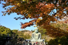 鎌倉紅葉スポット2014:人気の北鎌倉・長谷周辺コース高徳院/大仏