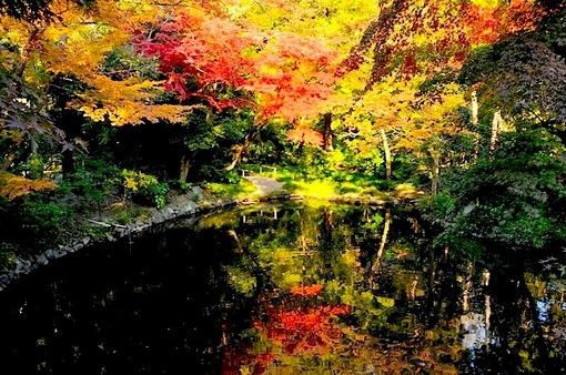 鎌倉紅葉スポット2014鶴岡八幡宮の柳原神池