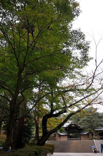 北鎌倉円覚寺の紅葉2014