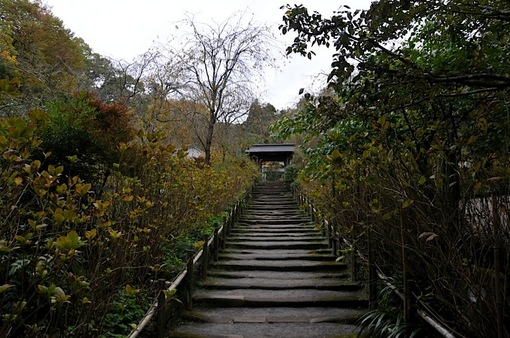 北鎌倉紅葉散策チェック2014明月院の紫陽花の参道