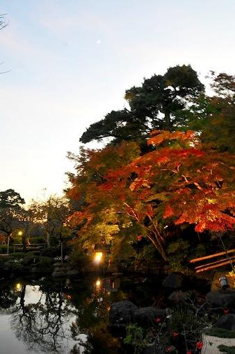 鎌倉紅葉チェック2014【長谷】長谷寺のライトアップ開始!