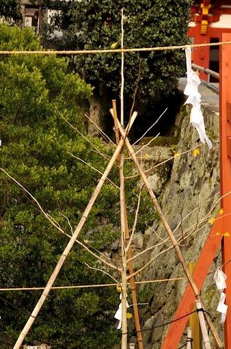 鎌倉鶴岡八幡宮の大銀杏若木の紅葉