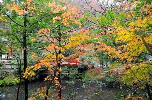 鎌倉鶴岡八幡宮柳原神池の雨の紅葉