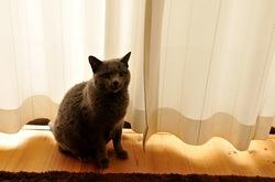 週刊文春の表紙とロシアンブルーネコ/猫ティナ