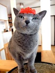 ネコ猫ロシアンブルーティナの節分&おかめコスプレ