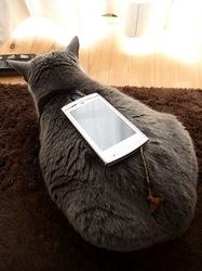 ひなたぼっこで携帯置きスタンドのティナ