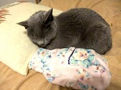 湯たんぼ&毛布・羽毛布団で熟睡ニャンコ