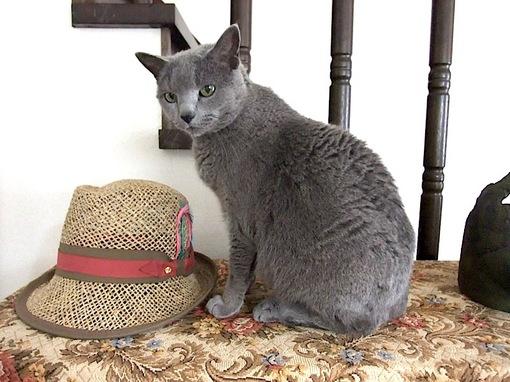 ニャンコ(ネコ/猫)はどれだ?