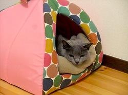 ネコハウスで熟睡中のロシアンブルーネコティナ