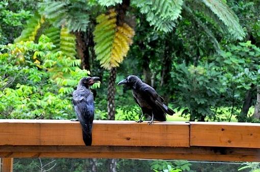 湘南から沖縄八重山旅行西表島のジャングルホテル