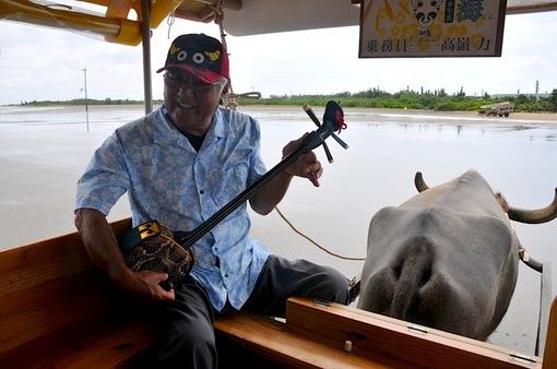 湘南から沖縄八重山旅行西表島から水牛車で由布島へ