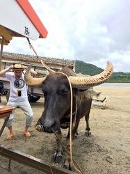 湘南から沖縄八重山旅行西表島から由布島の水牛車