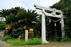 湘南藤沢から五島列島へ宇久島の三浦神社のソテツ